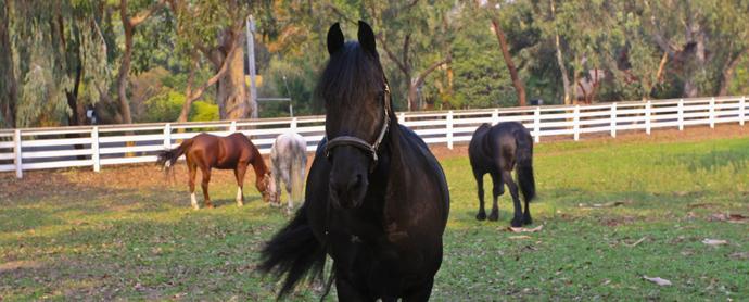 Horse Adoption & Rescue Organizations