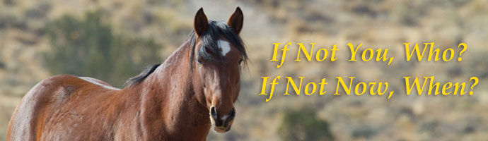 You can Help Save Wild Mustangs